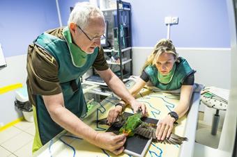 Consultation spécialisée, clinique vétérinaire de l'arche