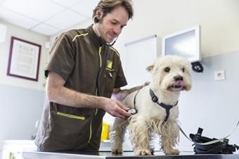 Consultation générale, clinique vétérinaire de l'arche